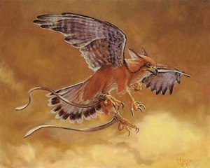 Suntail Hawk